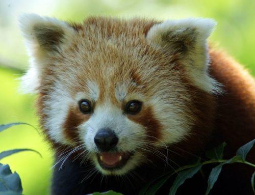 Firefox 86 verbessert Komfort und Sicherheit