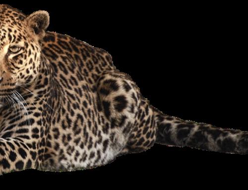 PHP und Symfony: Erste Hauptversion der Bibliothek Panther
